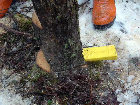 At The NSDNR Chainsaw Safety Course