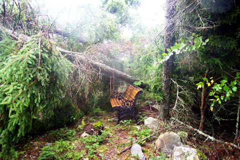 The Lingering Effects Of Hurricane Juan