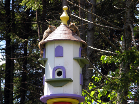 And I Thought It Was A Birdhouse!