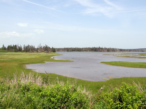 Lawrencetown Beach - Atlantic View Trail