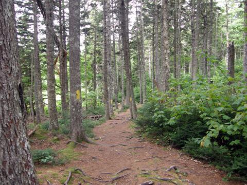 Caching At Blomidon Provincial Park
