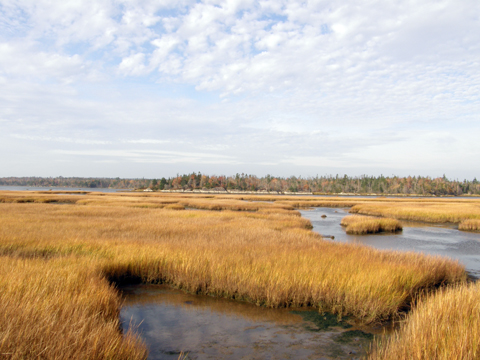 The Salt Marsh Trail