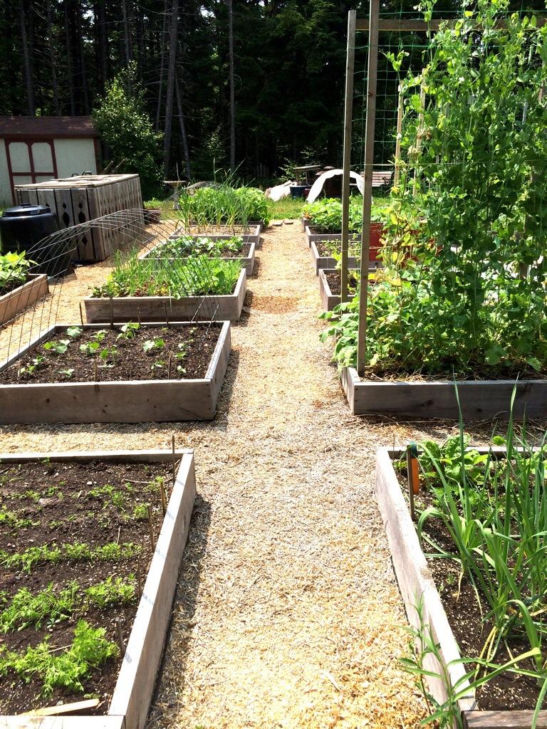 how to grow a green garden