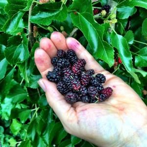 All Around The Mulberry Bush
