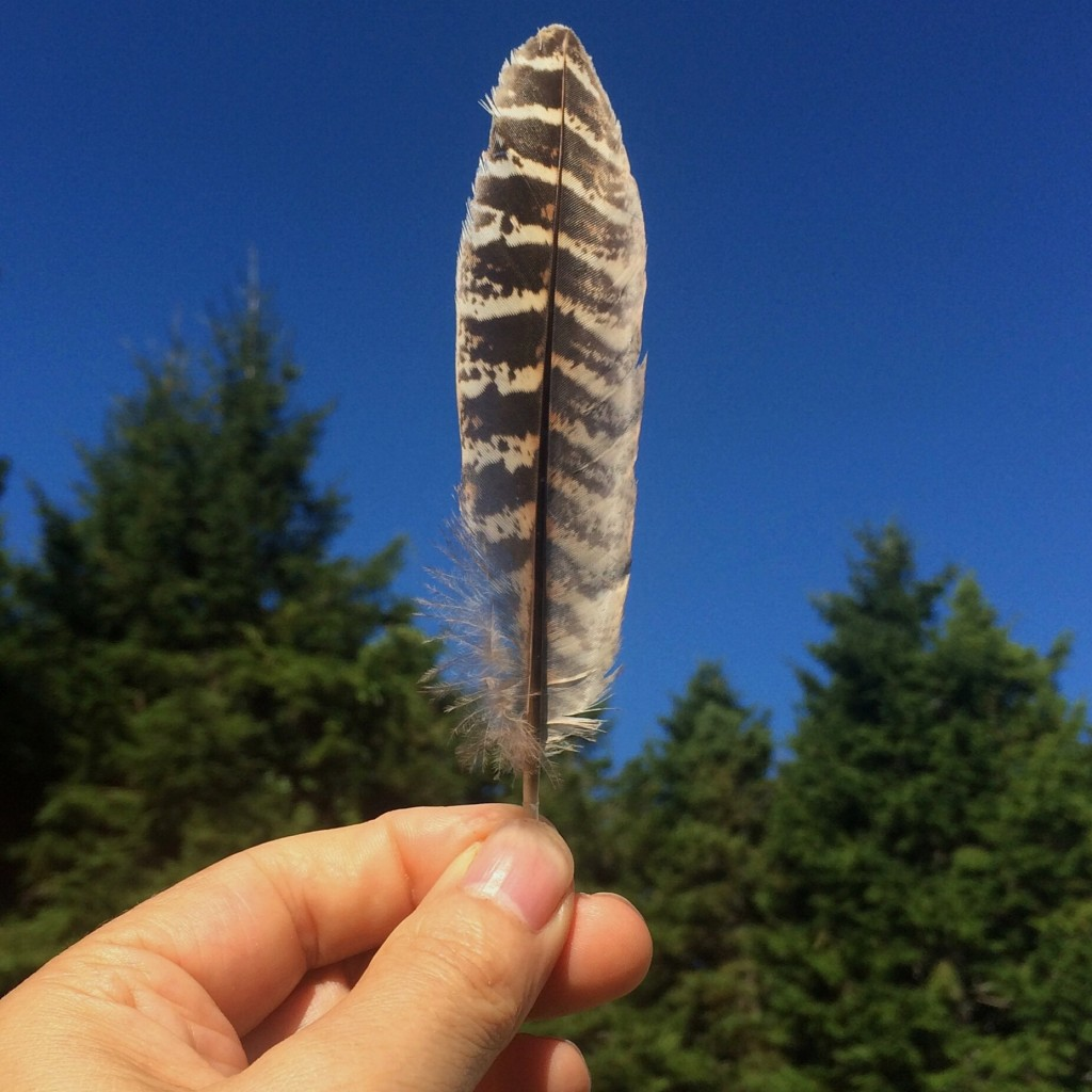 Feather From The Sky