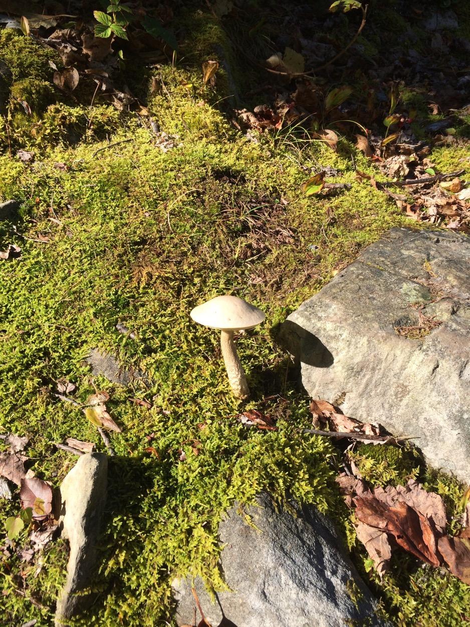 Costley Farm Trail mushroom