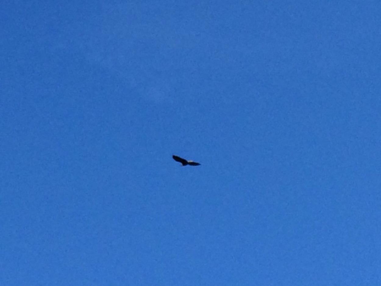 eagle siting