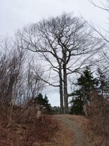 Wisdom Of A Tree