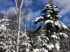 Last Night's Snow & The Winter Garden